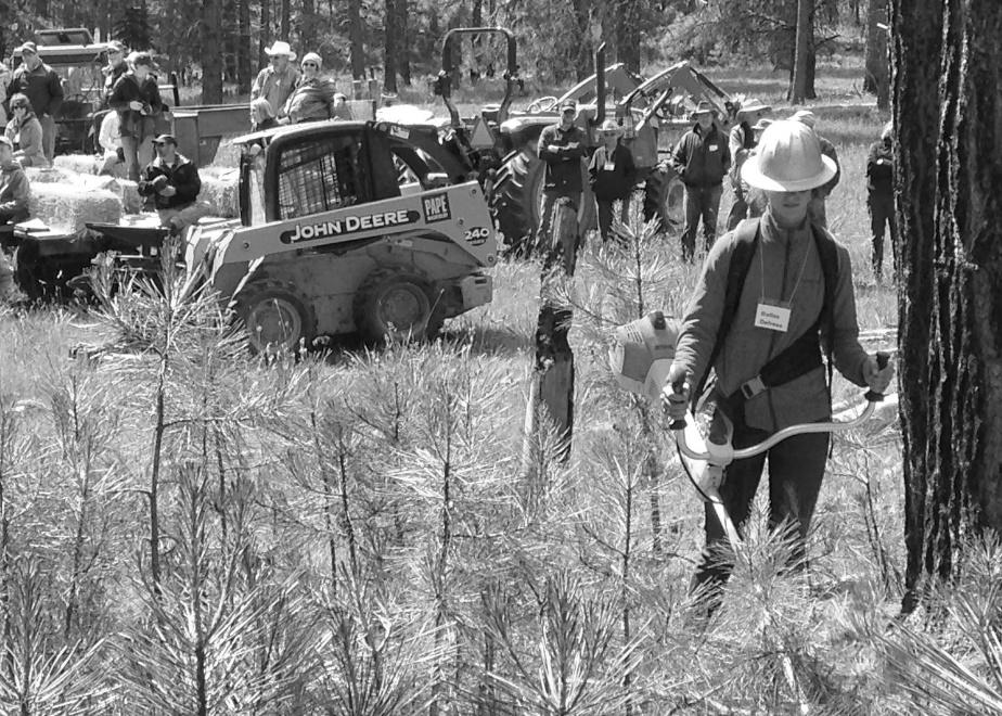 Pre-commercial and commercial thinning demonstrations