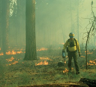 A controlled burn for land management